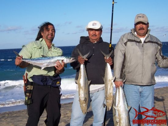 Surf fishing in cabo in feb bloodydecks for Fishing in cabo