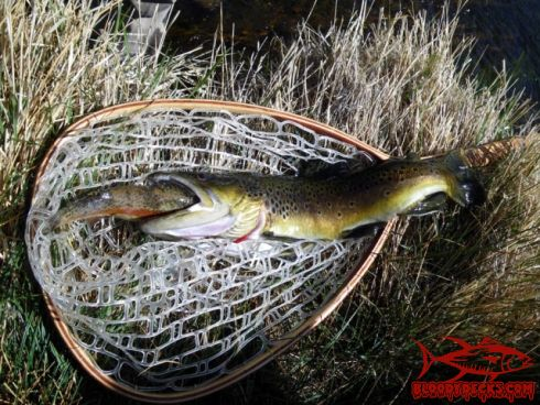 East walker report and pics bloodydecks for Walker river fishing