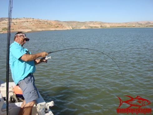 What is the lake mead fishing report for Fishing lake mead